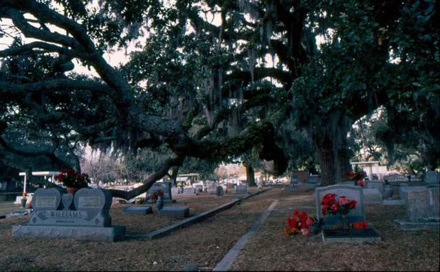 biloxi-cemetery-1-nicole-young_jpg