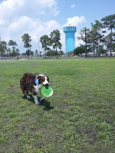 Dog park images 1